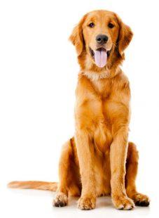 VaporFi Pet Safety Tips